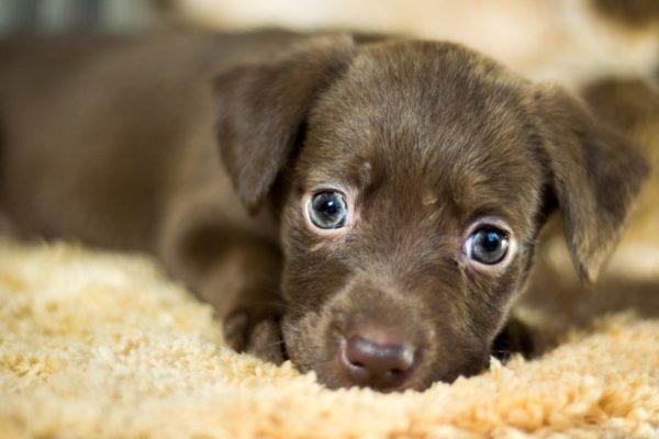 Энтеросгель щенку