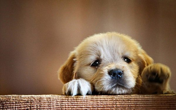 Энтеросгель щенку при поносе