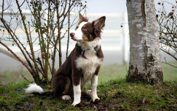 Как измерить рост собаки в холке читайте статью
