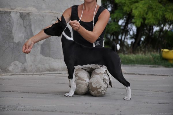 Как измерить рост собаки в холке. Полезный навык для любого хозяина