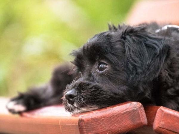 Как отучить собаку или щенка скулить