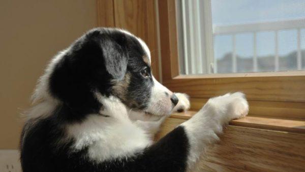 Как отучить собаку или щенка скулить. Эффективные способы