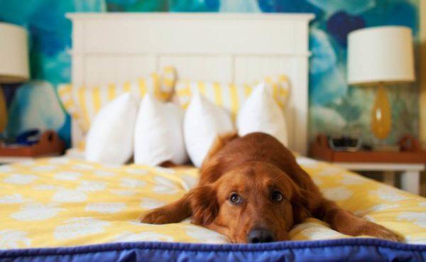 Как отучить собаку спать на кровати с хозяином. Простые способы