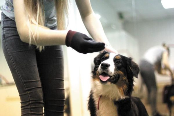 Как показать собаке что ты вожак. Поведение настоящего хозяина