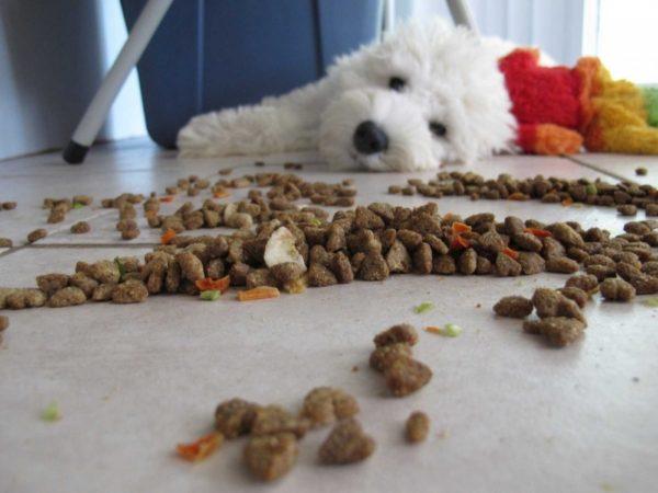 Как понять что корм не подходит собаке читайте статью