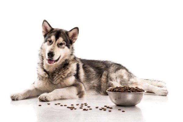 Как понять что корм не подходит собаке