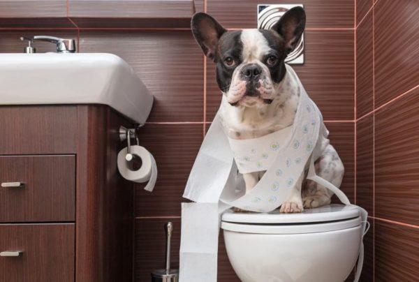 Как понять что собака хочет в туалет читайте статью