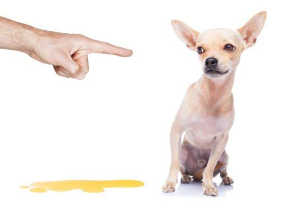 Как понять что собака хочет в туалет
