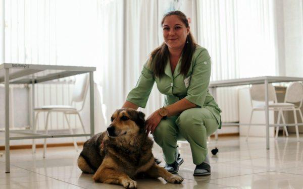 Как понять что собака умирает от старости читайте статью