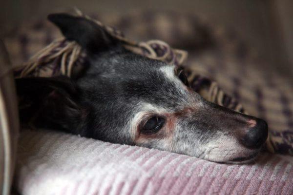 Как понять что собака умирает от старости. Помощь питомцу