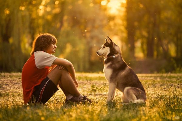 Как стать вожаком для собаки читайте статью