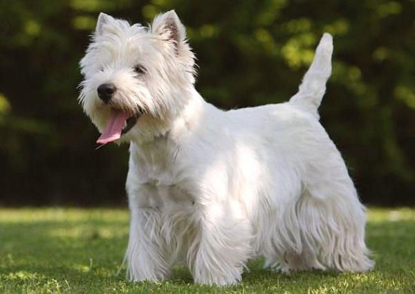 Какие породы собак не пахнут псиной читайте статью