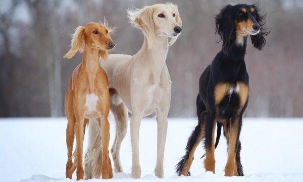 Какие породы собак не пахнут псиной. Обзор пород
