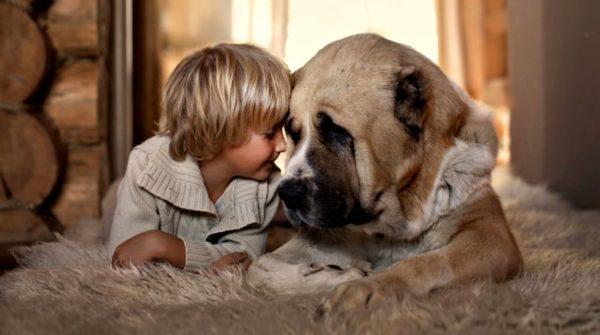 Можно ли заразиться глистами от собаки. Опасные виды паразитов