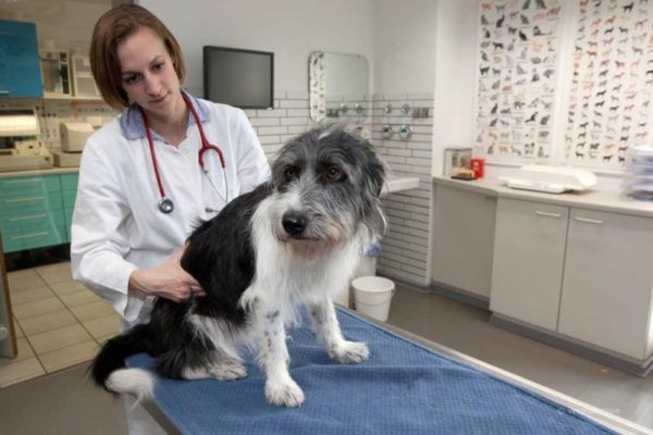 Очистительная клизма собаке при запоре читайте статью