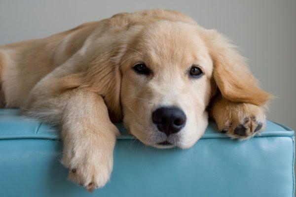 Очистительная клизма собаке при запоре