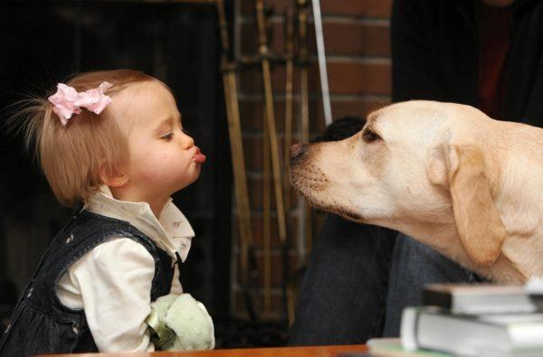Почему нельзя целовать собак