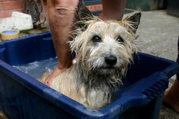 Почему от собаки пахнет псиной читайте статью