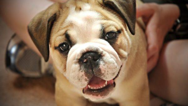 Почему от собаки пахнет псиной. Причины и способы устранения проблемы
