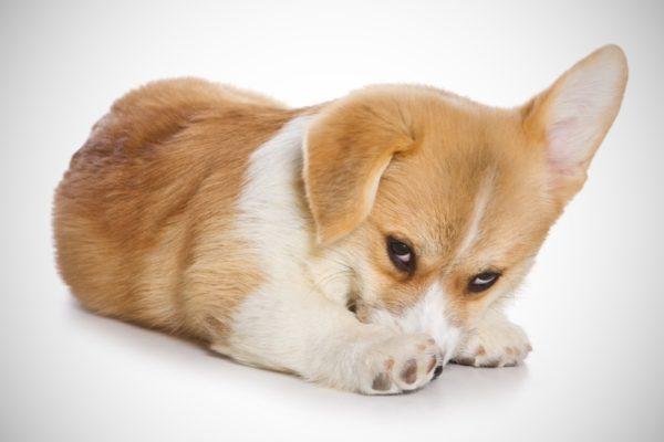 Почему собака боится грозы
