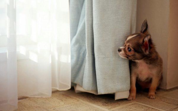 Почему собака боится грозы. Причины и рекомендации