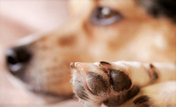 Почему собака грызет когти читайте статью