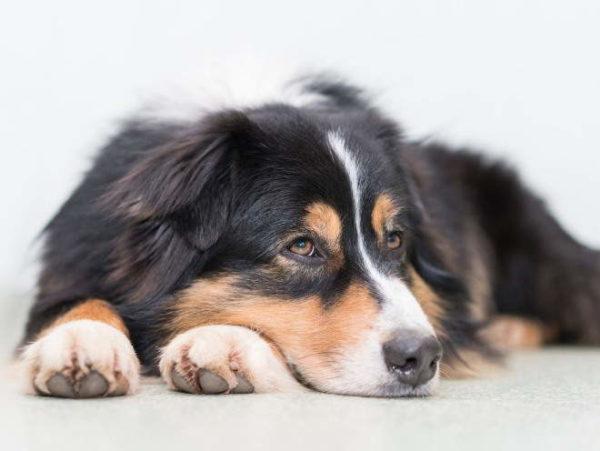 Почему собака худеет читайте статью
