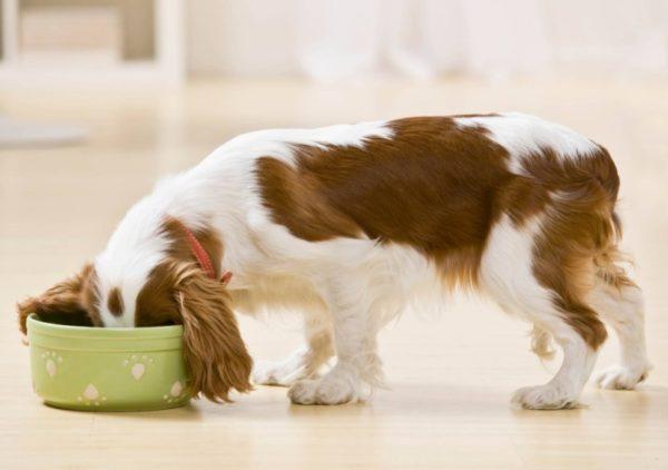 Почему собака худеет при хорошем аппетите