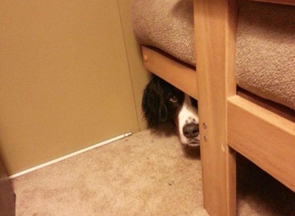 Почему собака прячется в темное место
