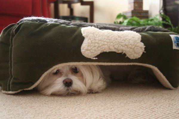Почему собака прячется в темное место. Подробный разбор проблемы