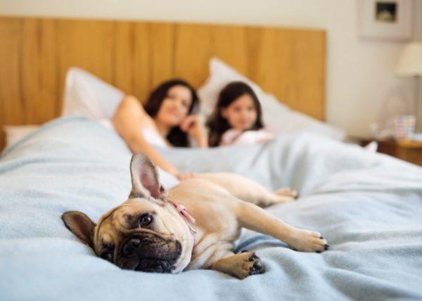 Почему собаки любят спать с хозяином