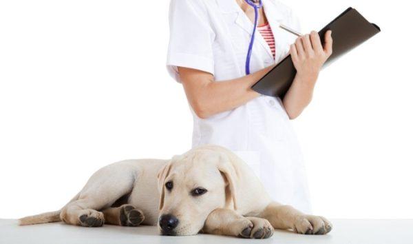 Смекта щенку при поносе читайте статью