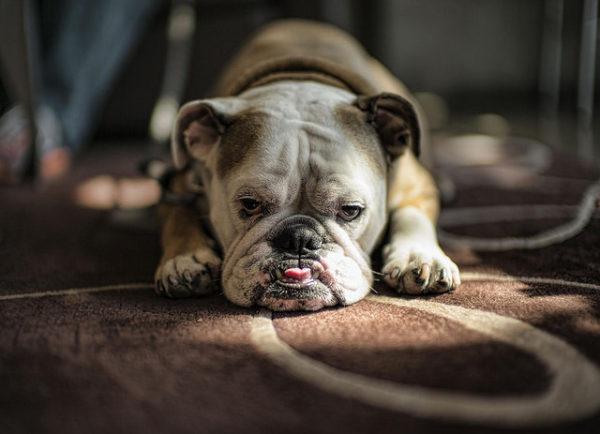 Собачка отдыхает
