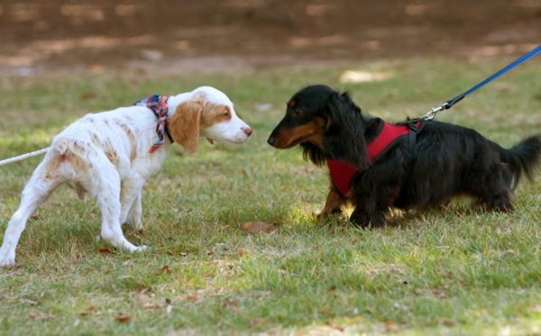 Собака боится других собак. Причины