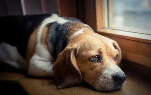 Собака боится грозы