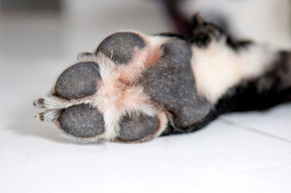 Собака грызет когти при стрессе