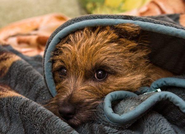 Собака прячется в темное место