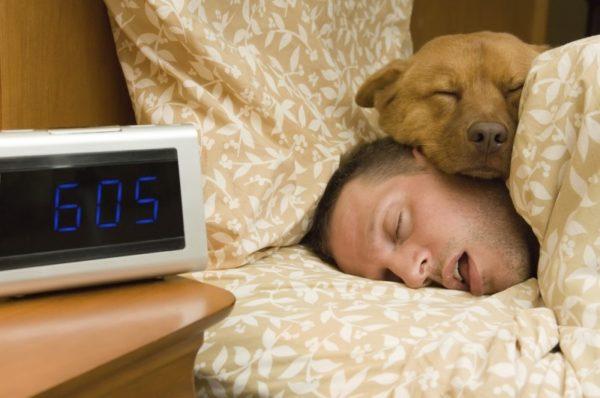 Собаки любят спать с хозяином