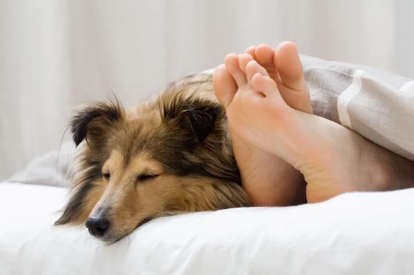 Собаки любят спать с хозяином, почему
