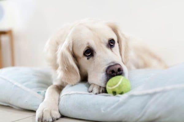 Токсикоз у собак читайте статью