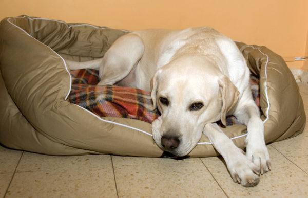 Токсикоз у собак