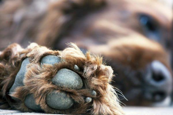 У собаки холодные лапы